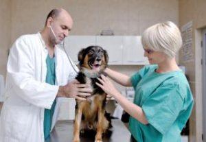 כלב מקבל טיפול וטרינרי