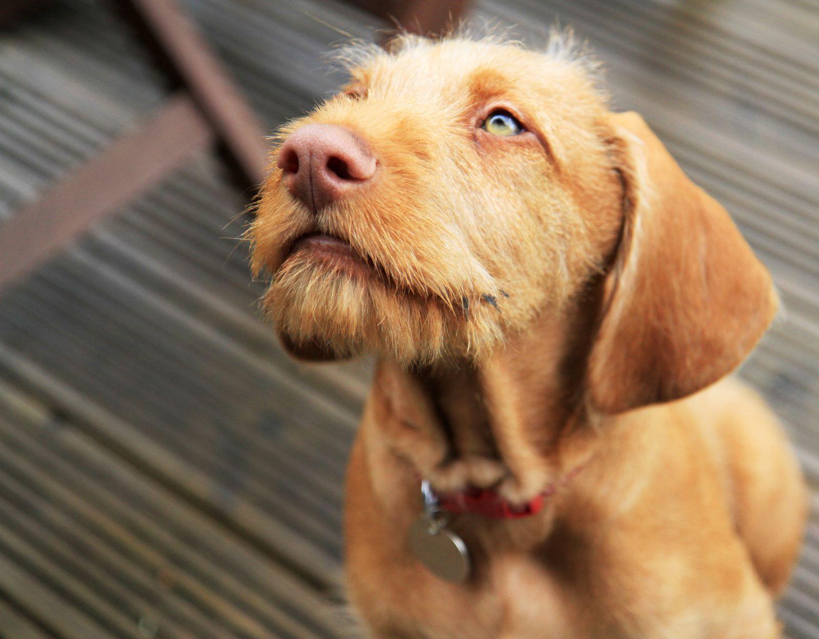 איך נפטרים מכתמים של כלבים
