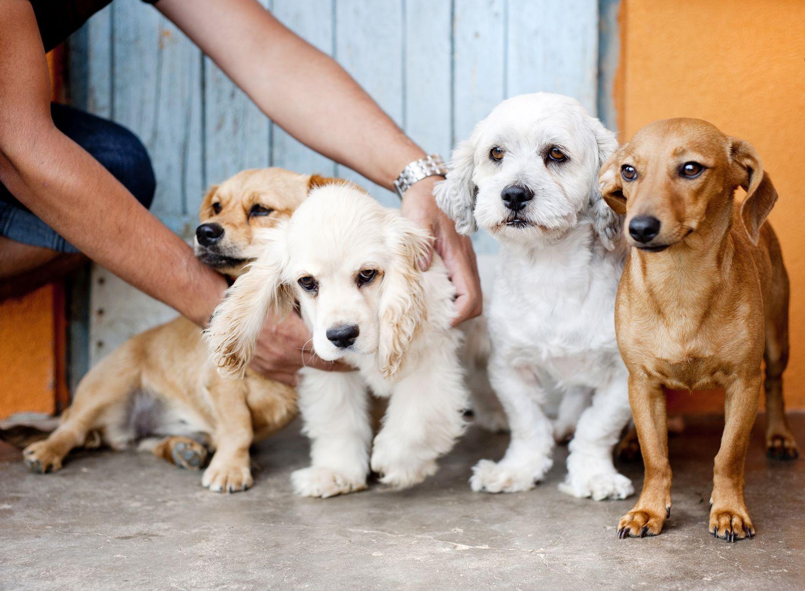 אימוץ כלבים