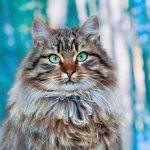 למה חתולים מגרגרים