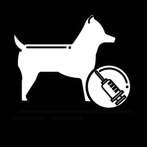 כלב בריאות