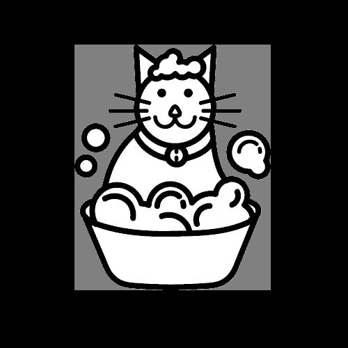 חתול בריאות והגיינה