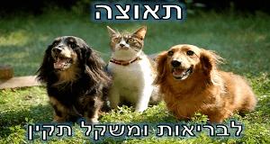 איך לעזור לכלב/לחתול לרדת במשקל בקלות ובאופן מסודר?