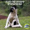 סיפורו של כלב עם פרעושים