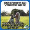 ציטוט של יום חמישי-למה כלבים לא מדברים?