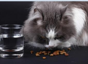 חתול אוכל חטיף