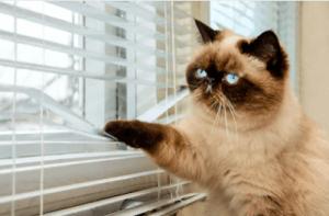 האם מזון לחתול ללא דגנים מזיק לי