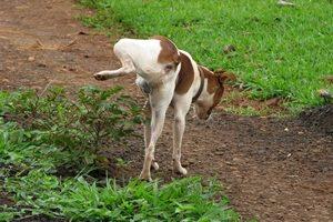 למנוע מכלב להשתין על הדשא