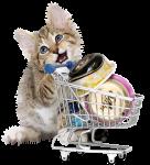 מה קונים לחתול חדש