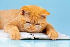 שאלון מאמץ חתול