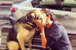 איך להגן על הכלב ?