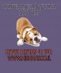 מדריך לכלב שמן