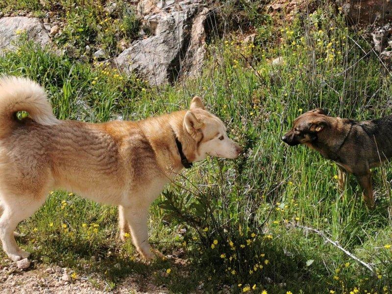 כלבים משחקים בשדה