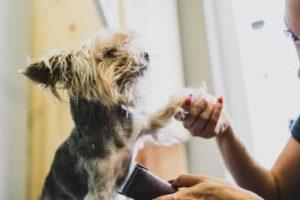 כלב ריח שתן